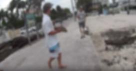 Baby Shark In Key West
