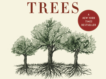 Book Talk: The Hidden Life of Trees: What They Feel, How They Communicate by Peter Wohlleben