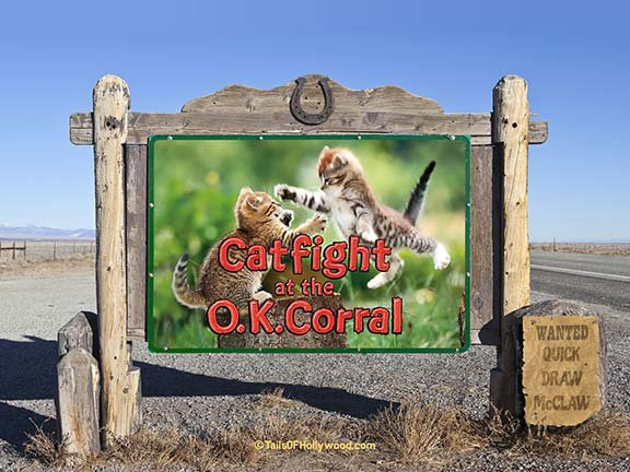 CATFIGHT AT THE OK CORRAL -BILLBOARD
