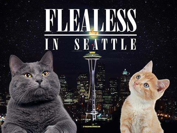 FLEALESS IN SEATTLE CATS
