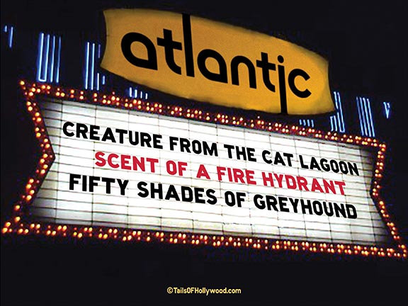 ATLANTIC Theatre -DOGS and CATS