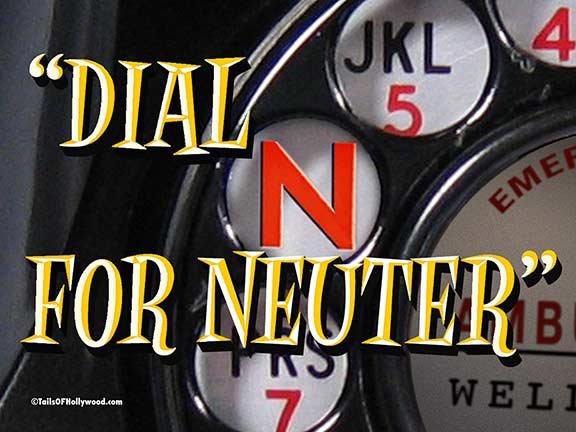 DIAL N FOR NEUTER