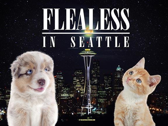 FLEALESS IN SEATTLE -PUPPY-KITTY