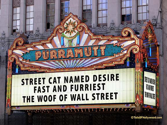 PURRAMUTT Theatre -DOGS and CATS