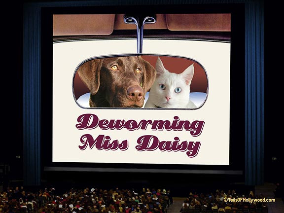 AUDIENCE Theatre DEWORMING MISS DAISY -DOGS and CATS