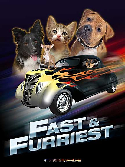 FAST and FURRIEST -DOGS and CAT