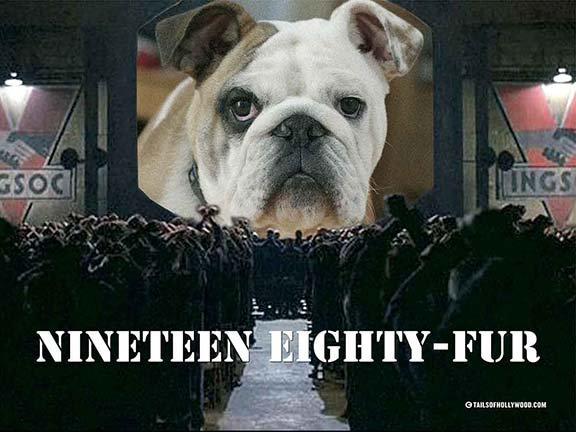 NINETEEN EIGHTY FUR