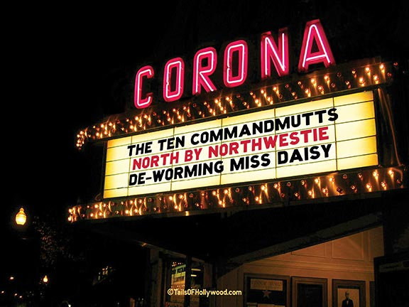 CORONA Theatre -DOGS and CATS