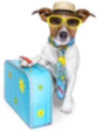isolated-dog-suitcase.jpg