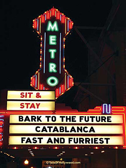 METRO Theatre -DOGS and CATS