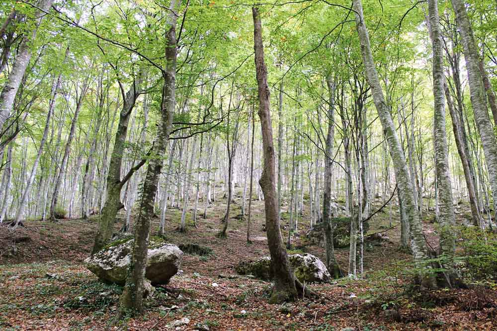 Woodland up in the Majella mountains