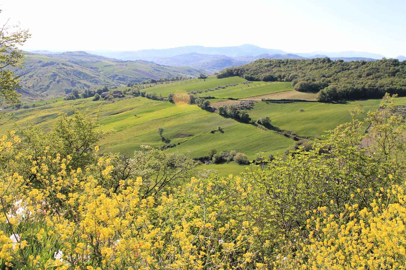 Caprafico valley in springtime
