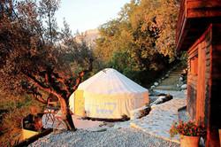 Olive blossom yurt at sunrise