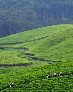 Nyungwe, Rwanda