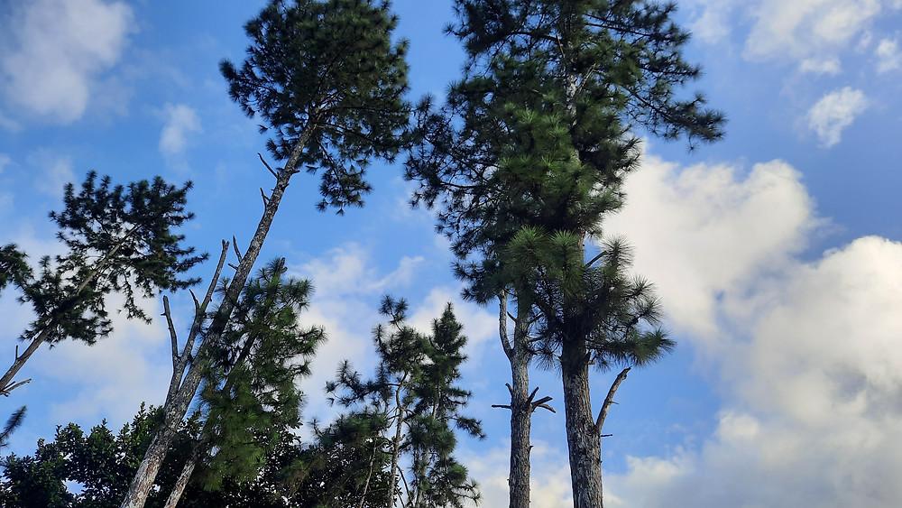 Cerro Azul Pines La Semilla