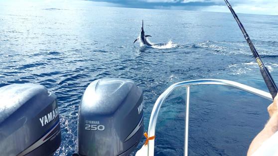 billfish and sailfish fishing in panama off of Isla Coiba