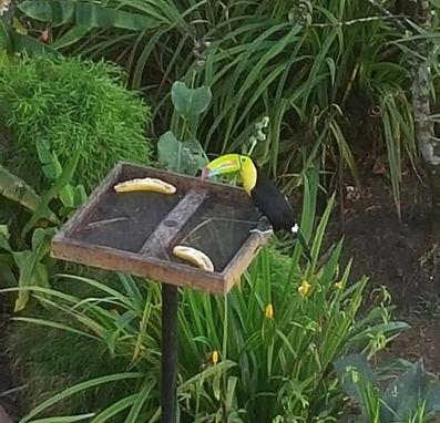 bird watching package at la semilla panama in cerro azul