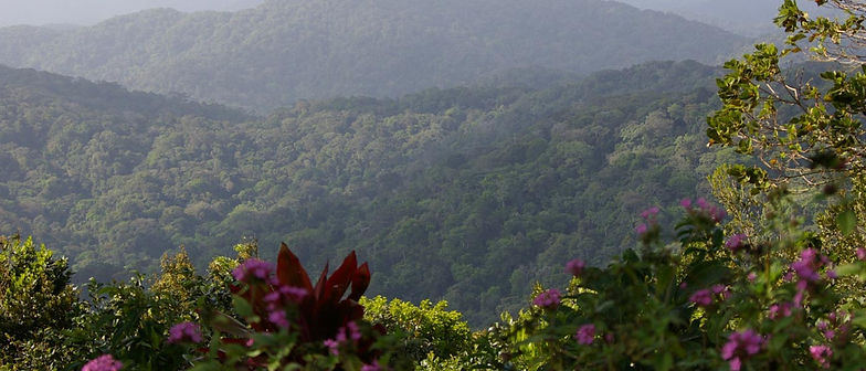 Outlook of Cerro Azul forest in Panama