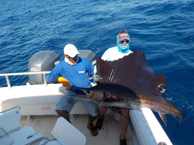 marlin caught in gulf of chiriqui panama