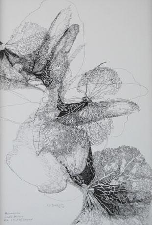 Metamorphose, Libelle-Hortensie