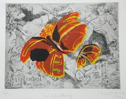 China Schmetterling Radierung-Collage