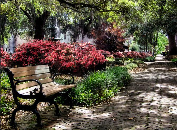 Savannah's Spring