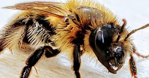 Bee Punk _ never mind the bee luck - kno