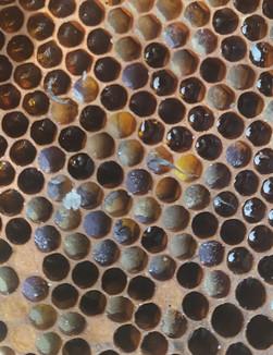 pollencomb.jpg