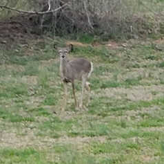 Deer and other wildlife are frequently spotted on the property.