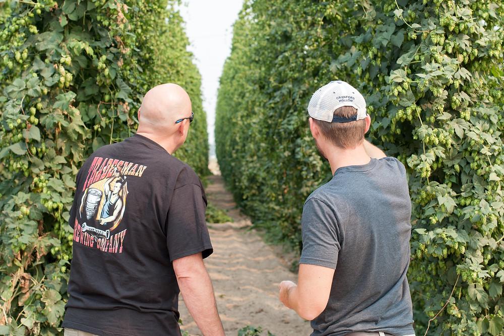 yakima quality hops field check