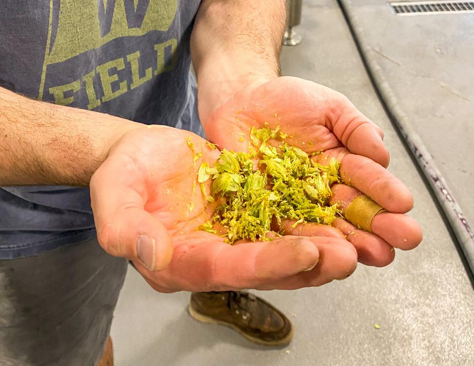 brewer holding el dorado hops