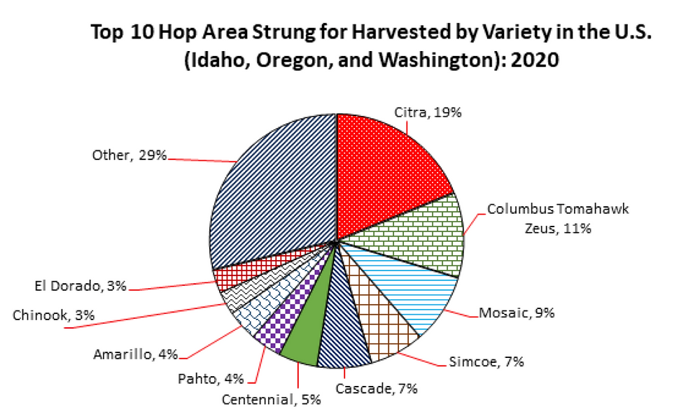 Top Hop Varieties