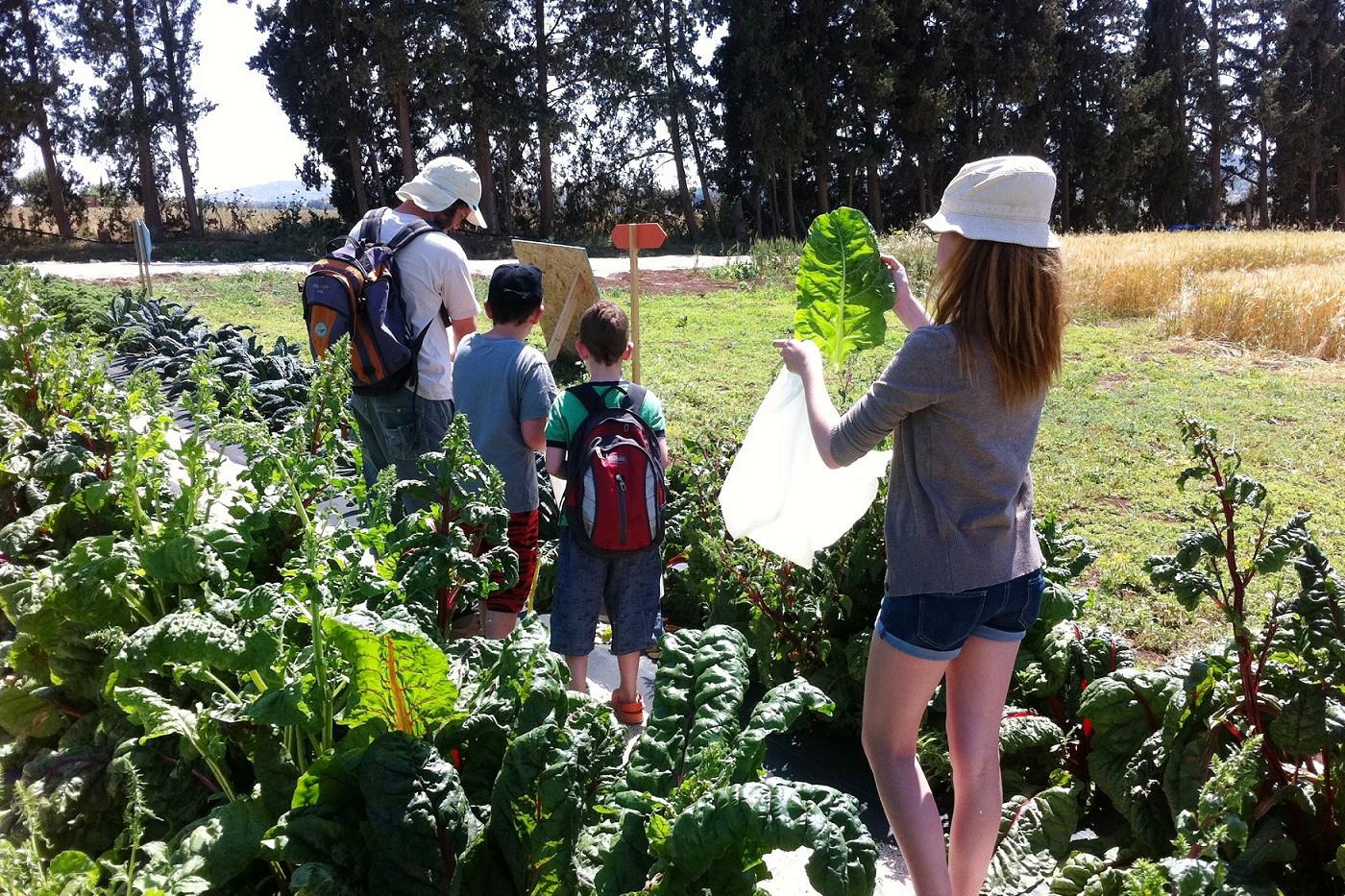 קטיף עצמי של ירקות אורגניים לפי העונה