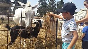 פינת חי אטרקציה לילדים בצפון