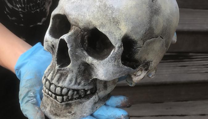 череп бутафорский