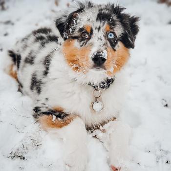 Kojak in the Snow