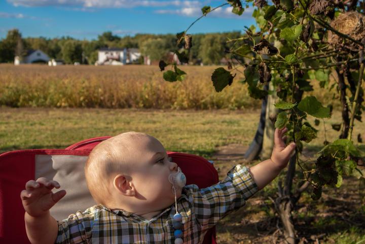 Exploring Grape Vines