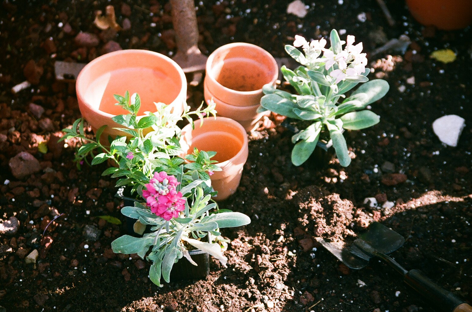 Pot Planting soil