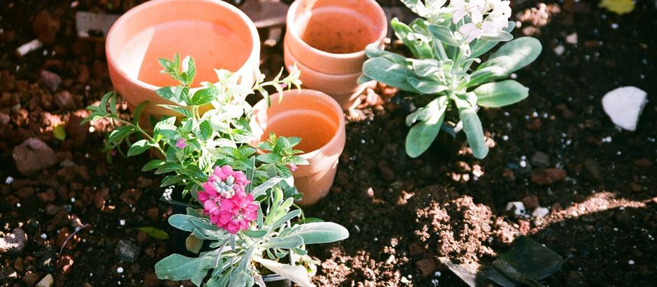 Plant a Flower Day: Social Media Fun in Dirt