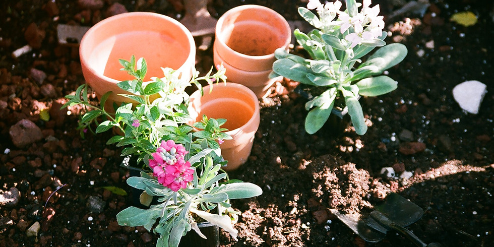 Earth Day Every Day: Starting a Native Plant Garden
