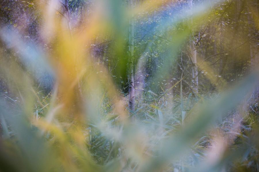Sélection nature-8.jpg