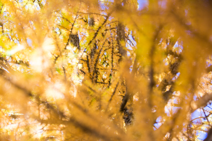 Sélection nature-5.jpg