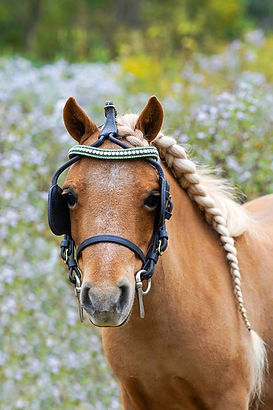Harness browband