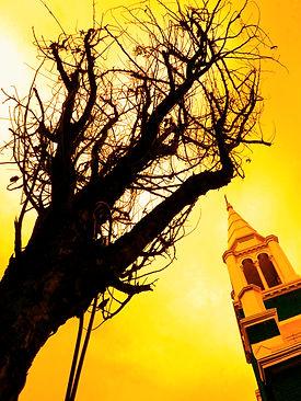 Tree and Church.jpg