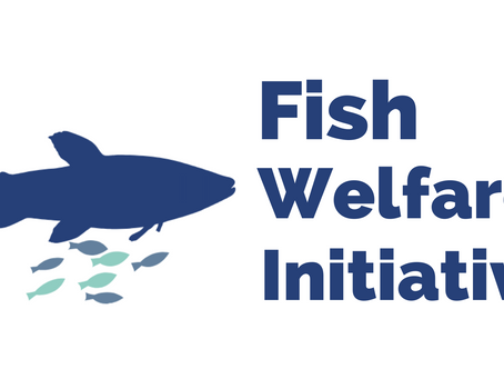 Introducing Fish Welfare Initiative