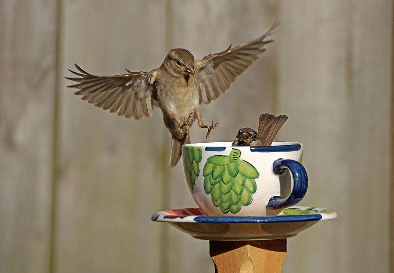 Teacup Sparrows 2