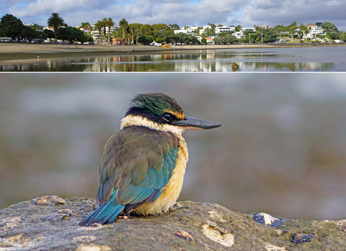 Kingfisher and St. Heliers combo