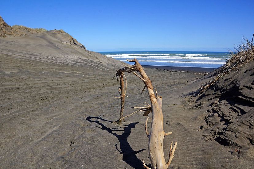 Sand dunes at Muriwai Beach