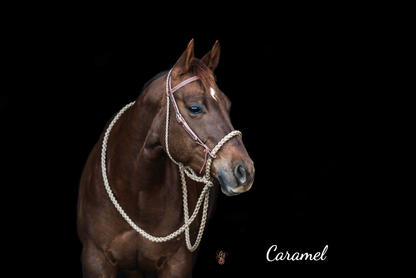 Caramel with Weaver headstall
