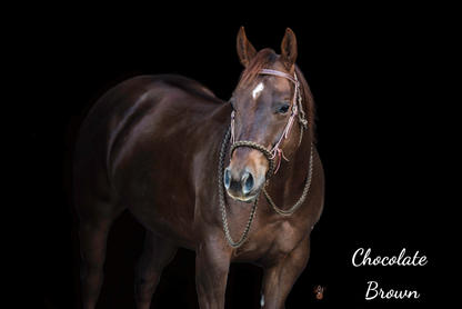 Chocolate Brown with Weaver headstall